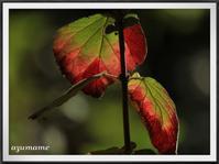 那須野が原公園で紅葉を探して - キルトとステッチ時々にゃんこ