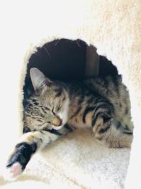 💩な毎日 - いぬ猫フェレット&人間