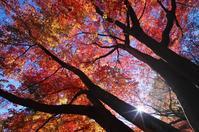 2019 平林寺の紅葉-5 - 自然と仲良くなれたらいいな2