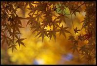 最終紅葉 - 花ありて 日々