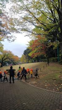 ドングリ拾い - 東京徒士組の会