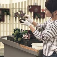 今年最後のHanaプラ - さにべるスタッフblog     -Sunny Day's Garden-