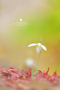 love letter - お花びより
