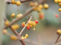 『野鳥と木の実と風景を~』 - 自然風の自然風だより
