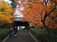 晩秋の北鎌倉を歩く - ひつじのつぶやき