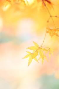 ほっと癒される晩秋 - 心 色