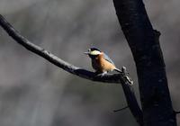 野鳥撮影 (尖石史跡公園) - 味わう瞬間 (とき)