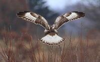 白が目立つ背面3種+1^^ - アイヌモシリの野生たち  獣と野鳥の写真図鑑