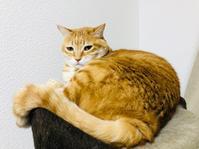喧嘩 - いぬ猫フェレット&人間