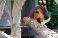 モアラ君冬期間は原則お休みです - 動物園に嵌り中2
