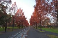 「久しぶりの朝散歩」 - 私の心の日記箱 Vol.0