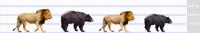 ライオンとアメリカクロクマ - アニマル情報202X
