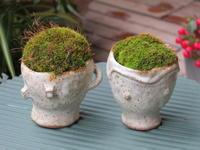 苔の小鉢 - あるまじろの庭