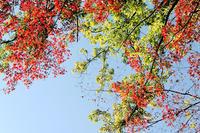【その他】芹が谷公園紅葉2019年-2019.12.14- - ヴァレッタの休日 ~まったり気分をあなたに~