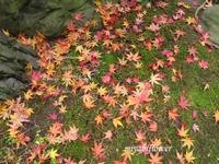冬の彩り - 風と花を紡いで