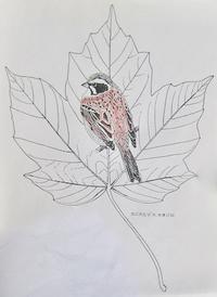 『#木の葉絵#leafart 』梶楓 ・頬白 - スケッチ感察ノート (Nature journal)