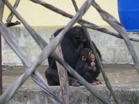 冬の京都チンパンジー家のみんな[京都市動物園] - a diary of primates