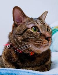 目くそ - キジトラ猫のトラちゃんダイアリー