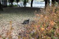 公園の猫 - *Any*