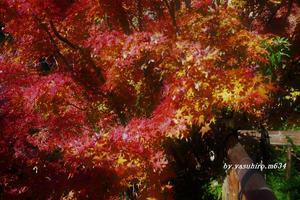 丈山苑の紅葉 - 俺の心旅