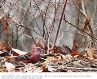 埼玉県県民の森 2019.12.9(2) - 鳥撮り遊び