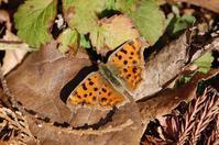 初冬の昼下がり - 蝶の縁