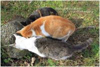 三猫会談 - 明日には明日の風が吹く