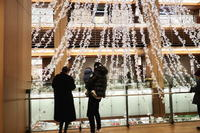 クリスマスツリー - summicron
