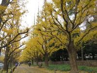 紅葉を愛でながら素敵なランチ「KEISUKE MATSUSHIMA」 - イタリアワインのこころ