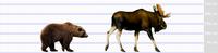ヒグマとヘラジカの比較(捕食事例等) - アニマル情報202X