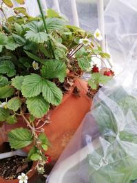 初収穫 - 好食好日