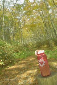 10月の山活⑲**健康の森の秋の優しさに包まれて - きまぐれ*風音・・kanon・・