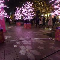 桜のイルミネーション - ご無沙汰写真館