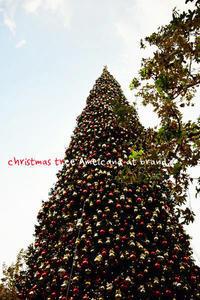 Christmas light up* - Avenue No.8