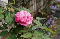12月の庭 - mille fleur の花とおやつ