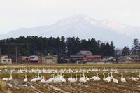 新潟県上越市田んぼに - 野沢温泉とその周辺いろいろ2