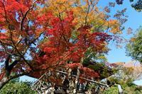 善峯寺の紅葉 - ぴんぼけふぉとぶろぐ2