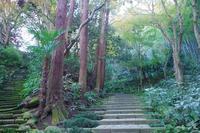鎌倉散策(二階堂地区) - 山の花、町の花