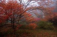 雨の鳥見山2 - toshi の ならはまほろば