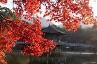 いつぞやの奈良公園1 - toshi の ならはまほろば