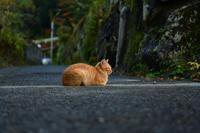 忘年会 - G-SHOT photo by MR.G