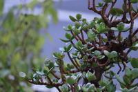 小雨に濡れる木々雑草。 - 一場の写真 / 足立区リフォーム館・頑張る会社ブログ