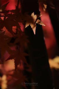 豊郷地区の秋散歩Vol.2 - TOCHIGI FOUR SEASONS