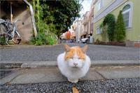 ネコに学ぶ - りゅう太のあしあと