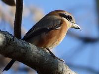 『笠松とんぼ天国の鳥7種~』 - 自然風の自然風だより