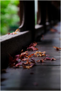 葉が落ちる頃 - HIGEMASA's Moody Photo