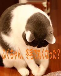 にゃんこ劇場「ふくちゃん、牛を食う?」 - ゆきなそう  猫とガーデニングの日記