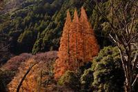 岩屋川内の紅葉 - きずなの家創り