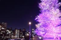 クリスマス - 感じるまま、気ままなblog