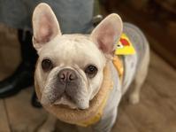 もう祝日ではないんだなぁ。 - dogdeco HOME   ドッグデコ ホーム 犬と暮らす家の日記